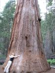 Lydia tree hugging - small